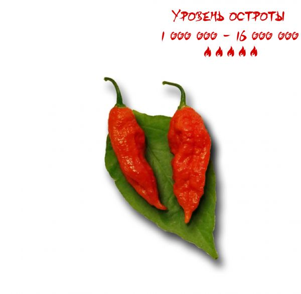 Семена BHUT JOLOKIA RED GHOST PEPPER, 10 штук